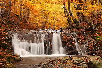 Водопад в лесу. Осенний пейзаж. (Код изображения: 01007)