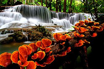 Оранжевые грибы у водопада. (Код изображения: 01008)