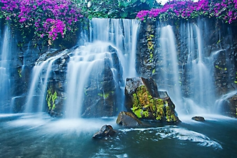 Фиолетовые цветы над водопадом (Каталог номер: 01033)