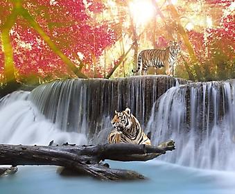 Тигры на водопаде (Каталог номер: 01036)