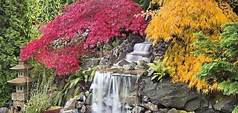 Японские клены у водопада (Каталог номер: 01041)