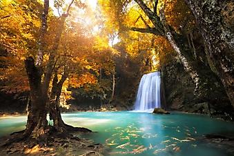 Водопад в осеннем лесу (Каталог номер: 01053)