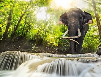Слон у водопада Эраван (Каталог номер: 01054)