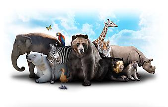 Группа животных. (Код изображения: 10010)