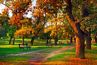Цвета осени в парке. (Код изображения: 17006)