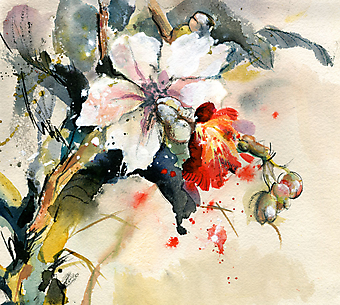 Орхидеи. (Код изображения: 17013)