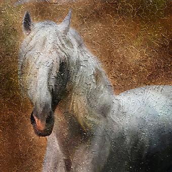 Лошадь. (Код изображения: 17016)