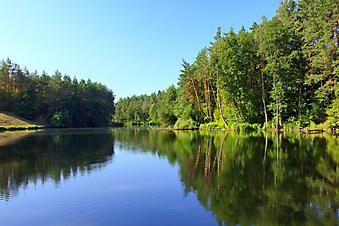 Озеро на фоне леса. (Код изображения: 19012)