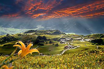 Цветочная поляна. (Код изображения: 19016)