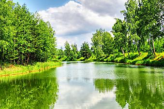 Зеленый пейзаж. (Код изображения: 19019)