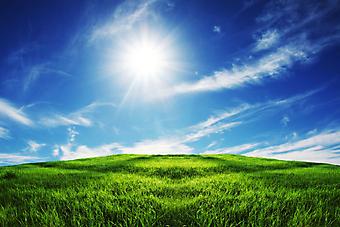 Зеленое поле. (Код изображения: 19020)