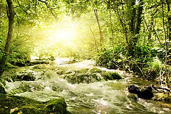 Рассвет в лесу. (Код изображения: 19021)