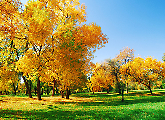Осенний парк. (Код изображения: 19028)