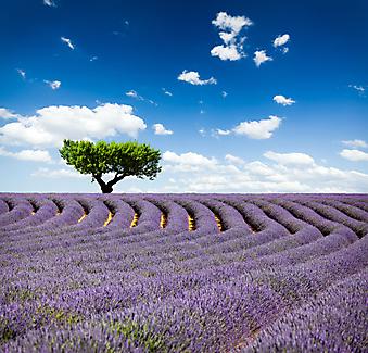 Фиолетовое поле. (Код изображения: 19044)