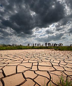 Засуха. (Код изображения: 19056)