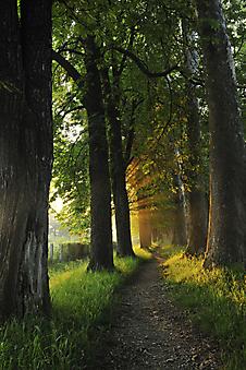 Тропинка в лесу. (Код изображения: 19060)