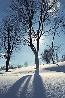 Зимний день. (Код изображения: 19061)