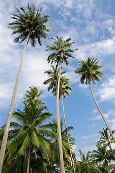 Пальмы. (Код изображения: 19062)