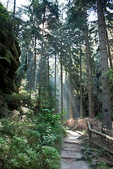 Лес. (Код изображения: 19063)