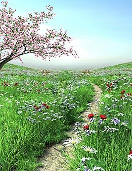 Тропинка на цветущем лугу (Каталог номер: 19065)