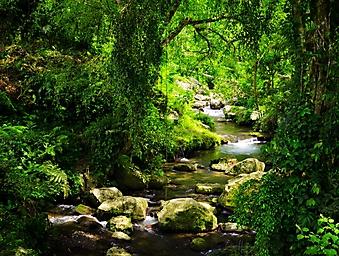 Ручей в тропическом лесу (Каталог номер: 19072)