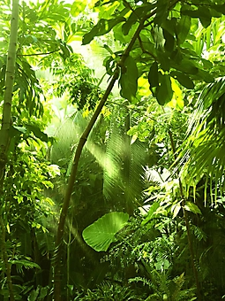Дождь в тропическом лесу (Каталог номер: 19073)