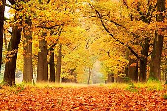 Яркий осенний лес (Каталог номер: 19082)