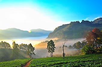 Туман в горах острова Чанг Мэй (Каталог номер: 19083)