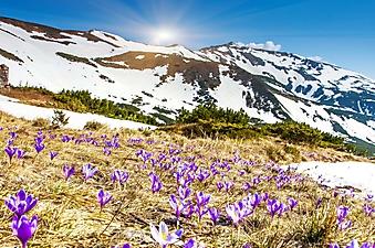 Весна в горах (Каталог номер: 19084)