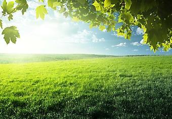 Поле с весенней травой (Каталог номер: 19087)