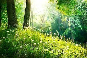 Опушка весеннего леса (Каталог номер: 19089)