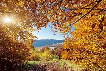 Яркая осенняя листва (Каталог номер: 19096)