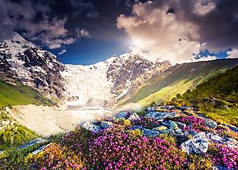 Цветочная горная вершина (Каталог номер: 19104)