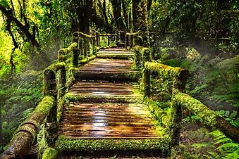 Мостик в лесу (Каталог номер: 19105)