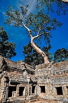 Храм в джунглях, Камбоджа (Каталог номер: 19109)