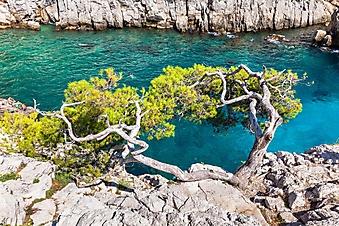 Дерево на отвесной скале (Каталог номер: 19112)