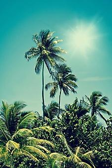Тропические пальмы (Каталог номер: 19116)