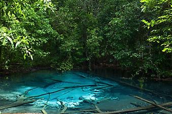 Пруд в тропических джунглях (Каталог номер: 19120)