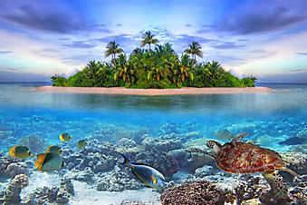 Морская жизнь. (Код изображения: 21005)