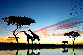 Сафари в Африке. (Код изображения: 21025)