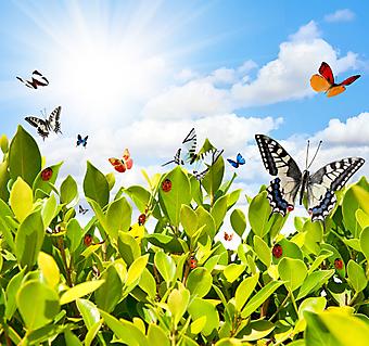 Бабочка и Божья коровка. (Код изображения: 21040)