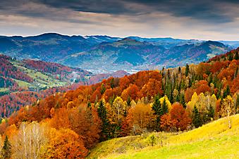 Осенний пейзаж. (Код изображения: 03022)