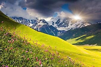 Цветы на высокогорном лугу, Кавказ (Каталог номер: 03070)