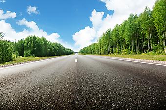 Дорога в лесу. (Код изображения: 06007)