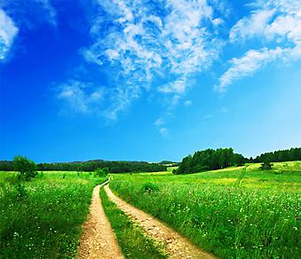 Дорога в поле. (Код изображения: 06013)