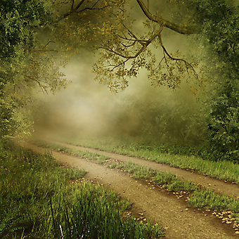 Дорожкка в туманном лесу. (Код изображения: 06023)