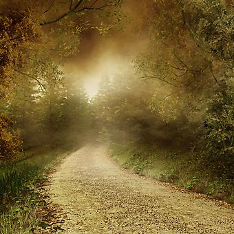 Проселочная дорога. (Код изображения: 06024)