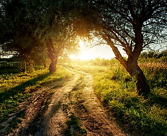 Дорога через сад (Каталог номер: 06036)