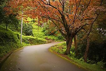 Дорога через лес (Каталог номер: 06049)