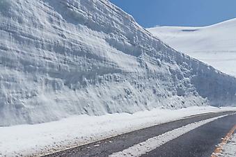 Снежная стена (Каталог номер: 06051)